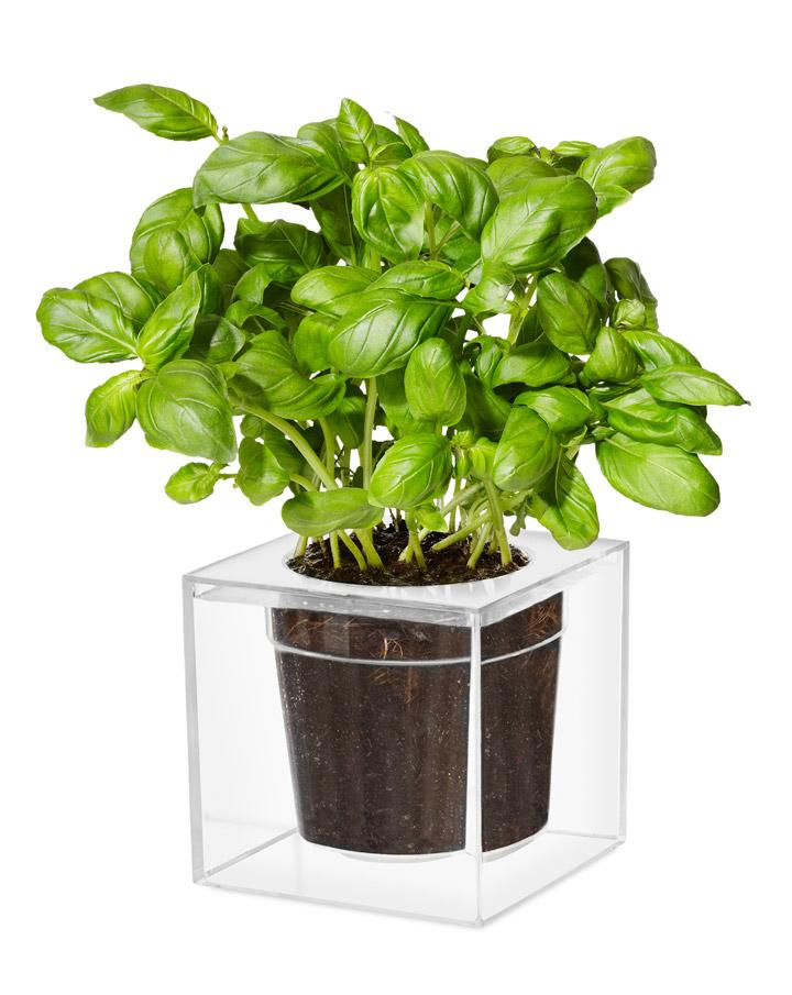 Boskee Cube Planter: $17.95 (orig. $25)