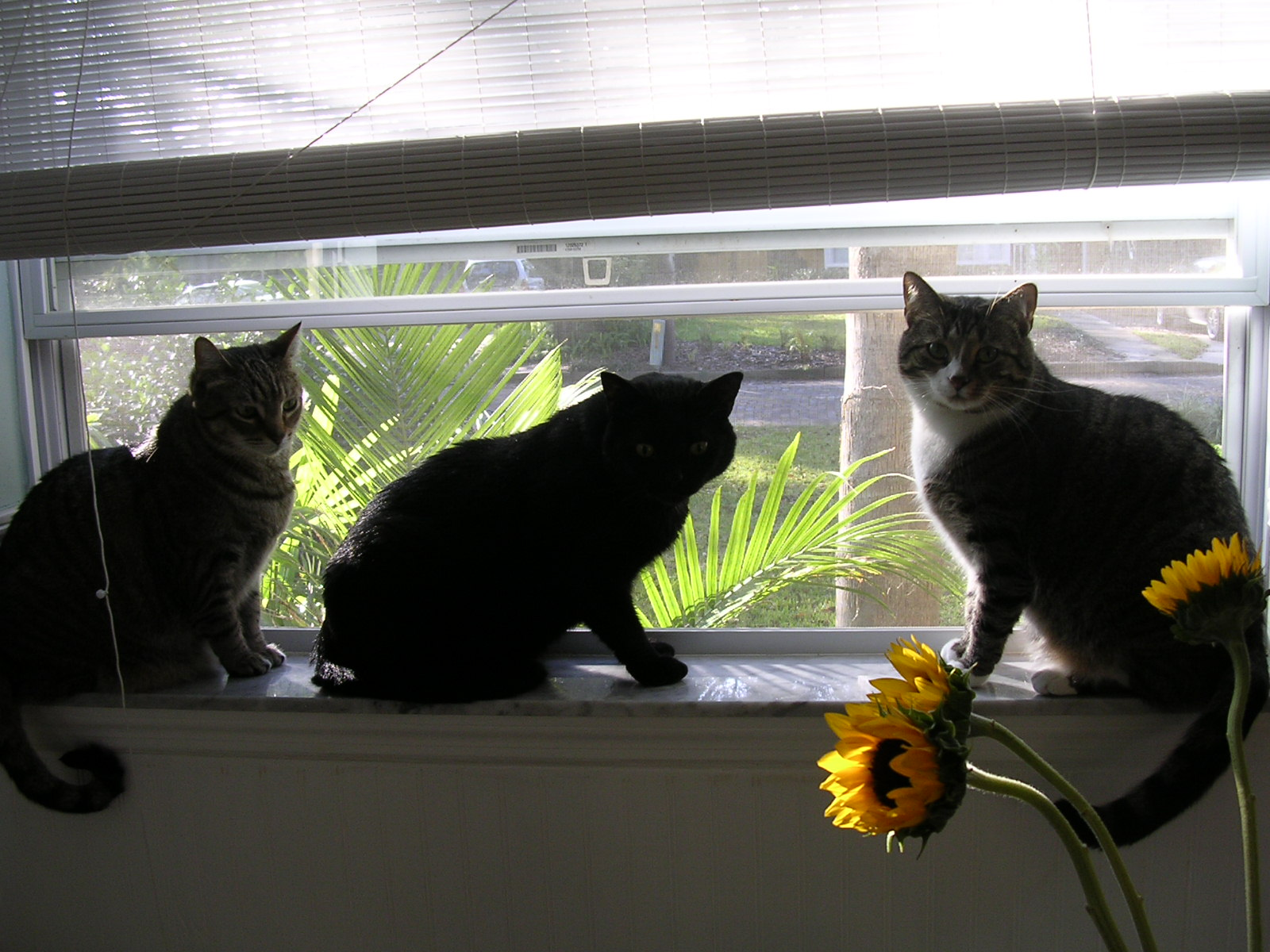 r-nichols-three-cats-picture.JPG