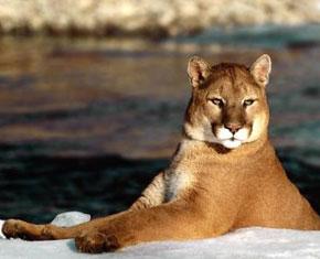 Cut the Cougar Crap